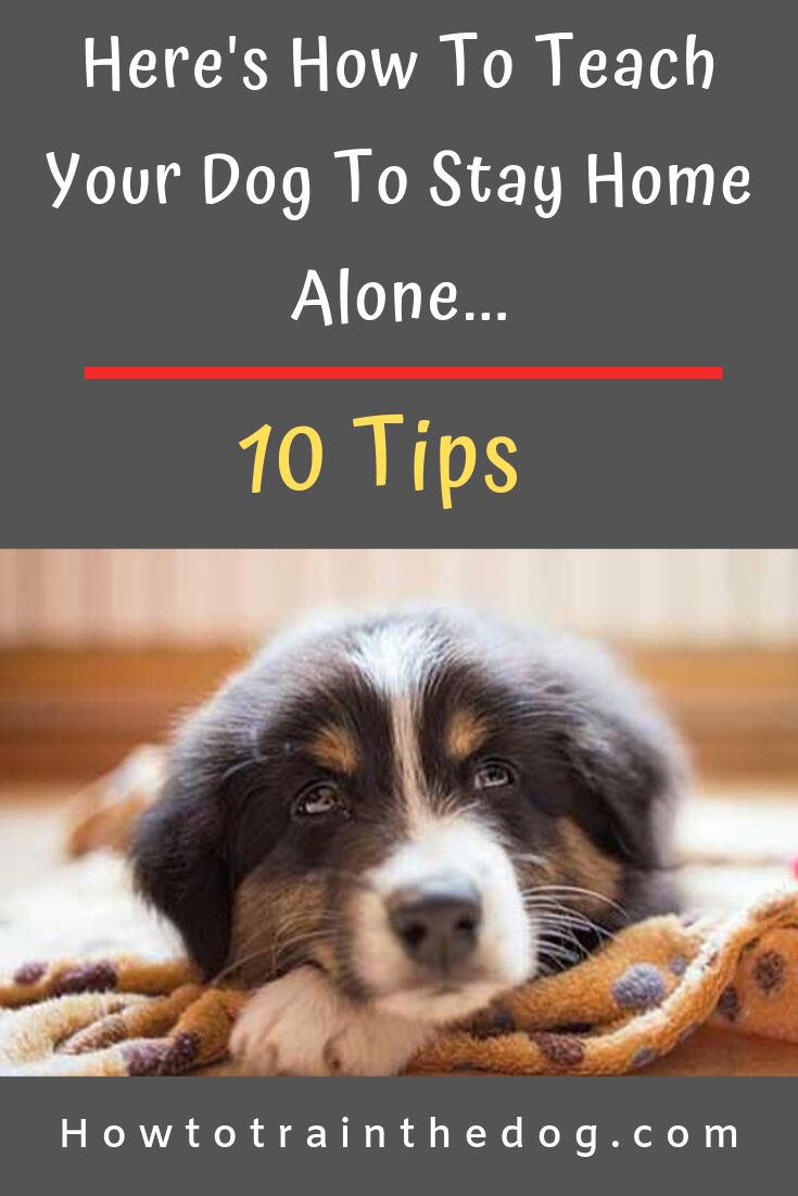 How To Teach Your Dog To Stay Home Alone 10 Tips Dog Training Your Dog Dogs