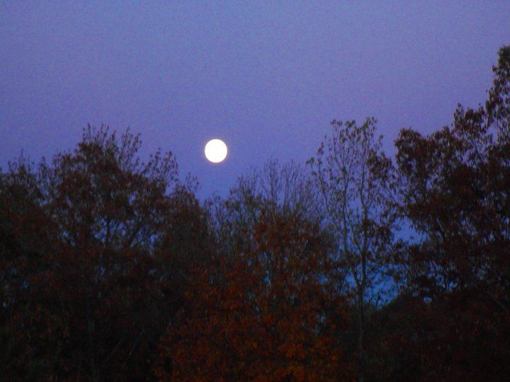 Fall moon, taken from my back porch..