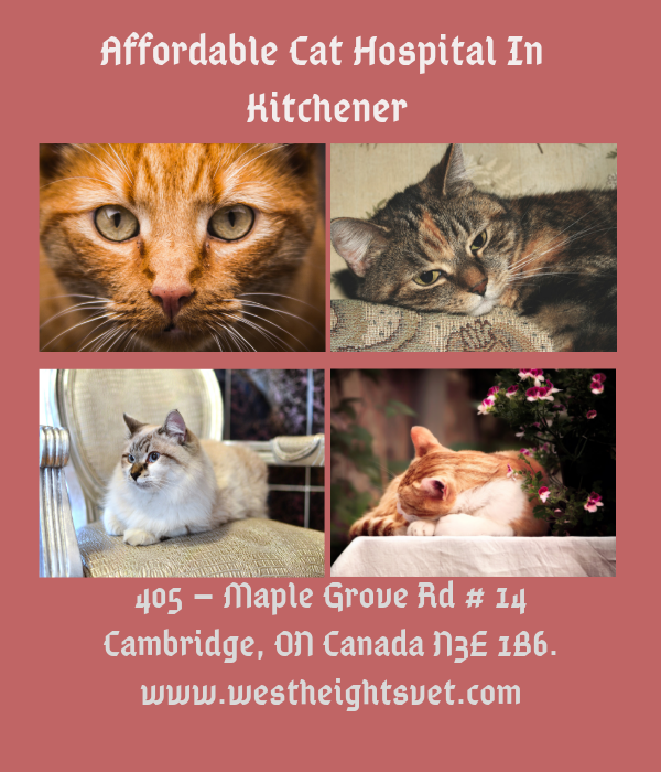 Westheights Veterinary Hospital Is One Of The Trusted Local Cat Hospital In Kitchener Offering Expert Cat Health Ca Pet Clinic Animal Hospital Dog Dental Care