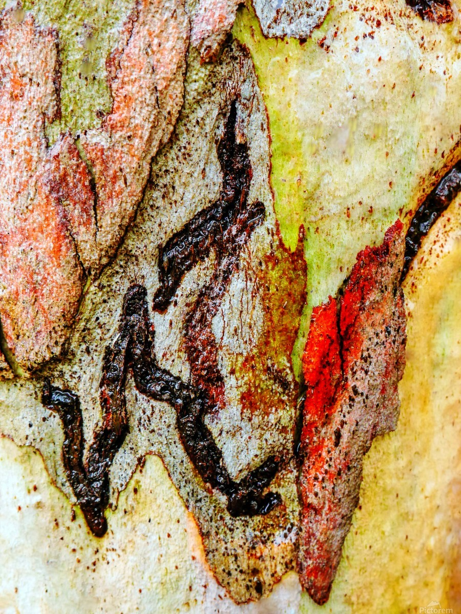 Aussie Gum Tree Bark 9 Lexa Harpell Canvas Artwork