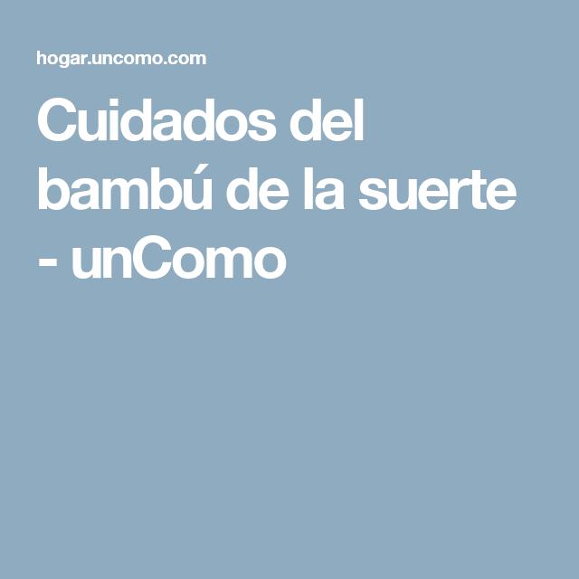 Cuidados del bambú de la suerte - unComo