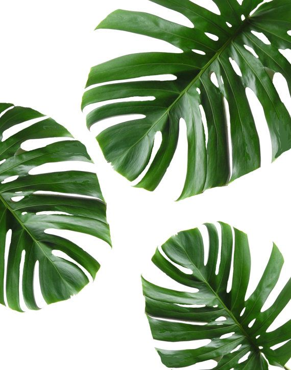 Tropical Leaf Printable Art Monstera leaves Tropical Leaves Tropical Decor Green Wall decor Instant Download Wall Art  sc 1 st  Pinterest : wall art leaves - www.pureclipart.com