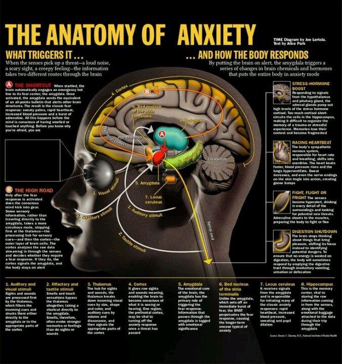 Anxiety | psychology | Pinterest | Neurociencia, Anatomía y Ansiedad