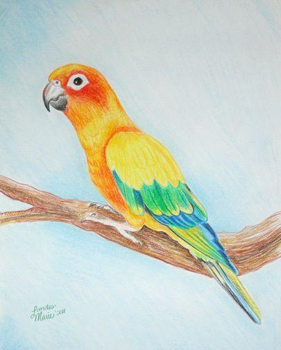Dibujos Lápiz De Color Animales Buscar Con Google Pajaros En