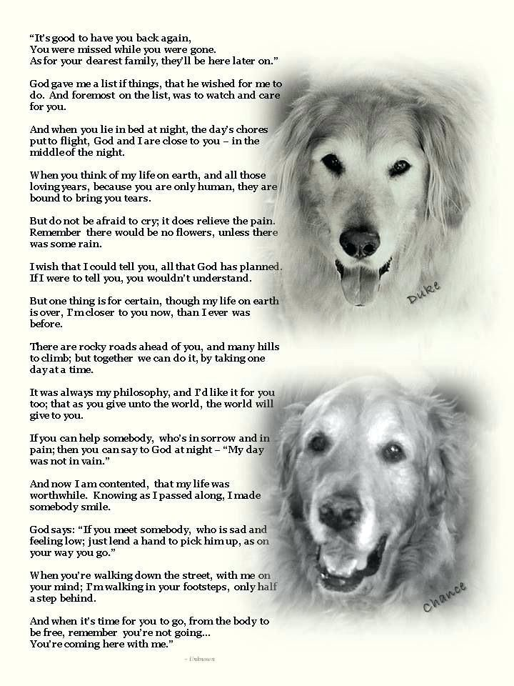 Saying Goodbye To My Dog Quotes Pet Quotes Dog Dog Quotes Dog Poems