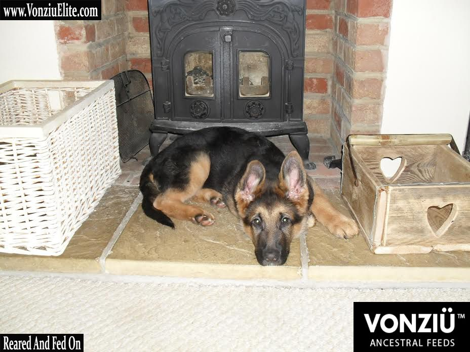 Pin By Vonziu Elite On Dogs Are Great Motivational Tools Best
