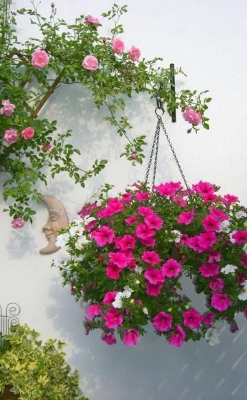 petunie pflanzen pflege und tipps petunien arten und pflege. Black Bedroom Furniture Sets. Home Design Ideas