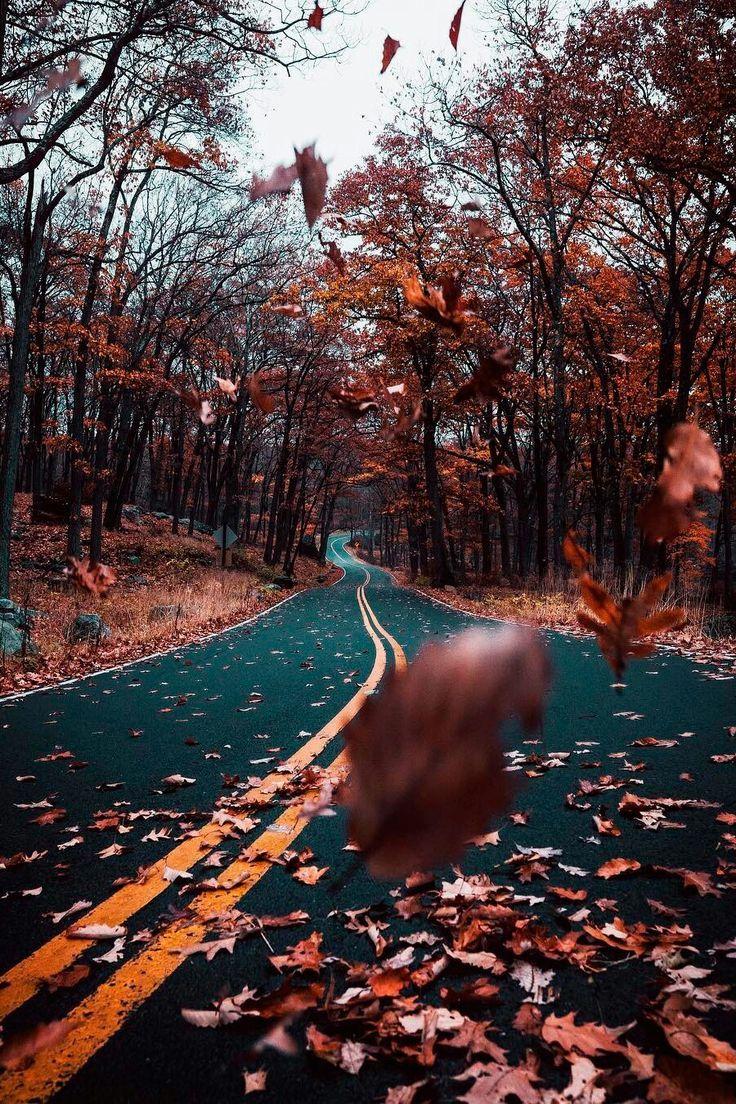 entdecken | Natur -  - #hintergrundbilder #falltumblr