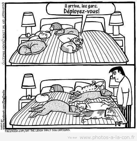 image drole au lit