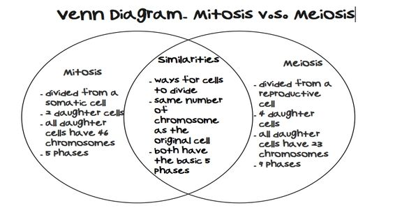 Image result for meiosis worksheet answer key | school ideas ...