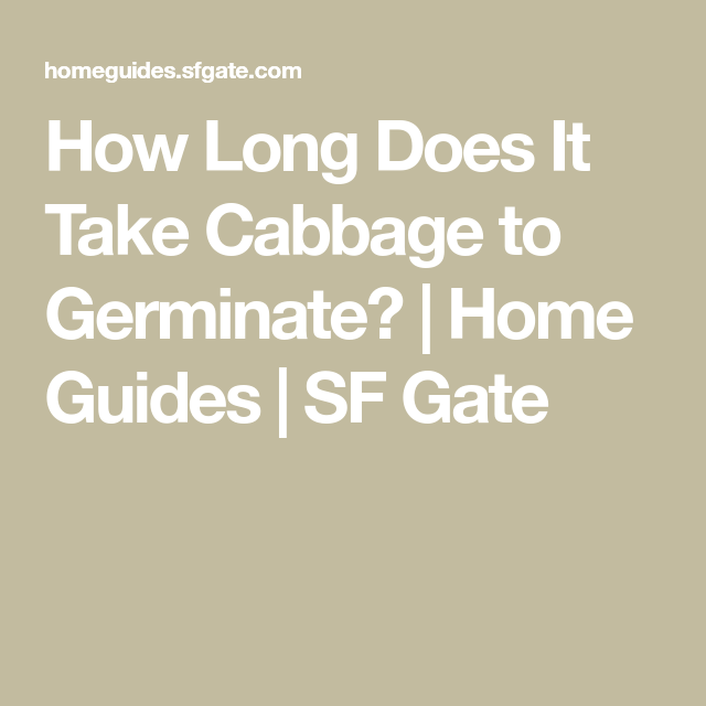 How Long Does It Take Cabbage To Germinate Cabbage Plant Growing Vegetables Cabbage Seeds