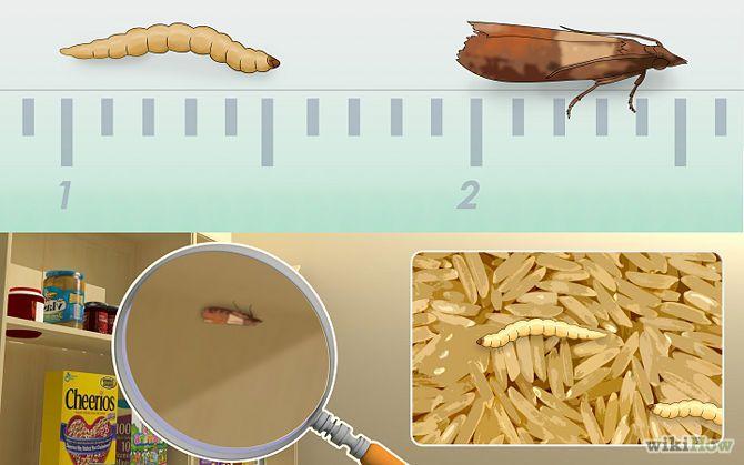 cf61ceefe7d5fbdb3c3dfba016c75bcd - How To Get Rid Of Insects In Rice Bag
