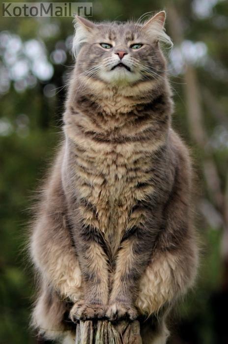 Лучшее | Котята, Животные, Кошки и котята