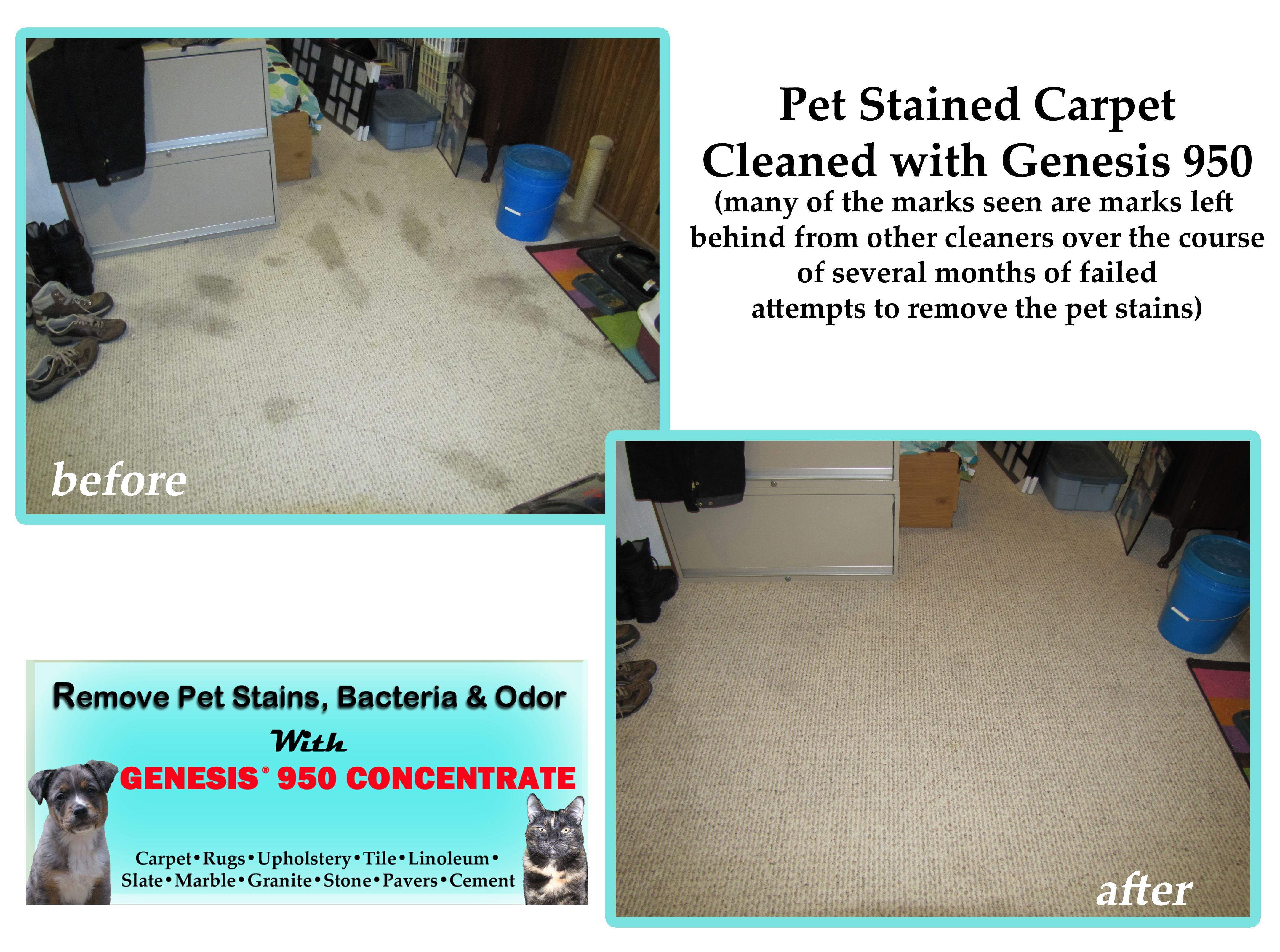 Remove Pet Stains And Odors From Carpet Why Vinegar Is