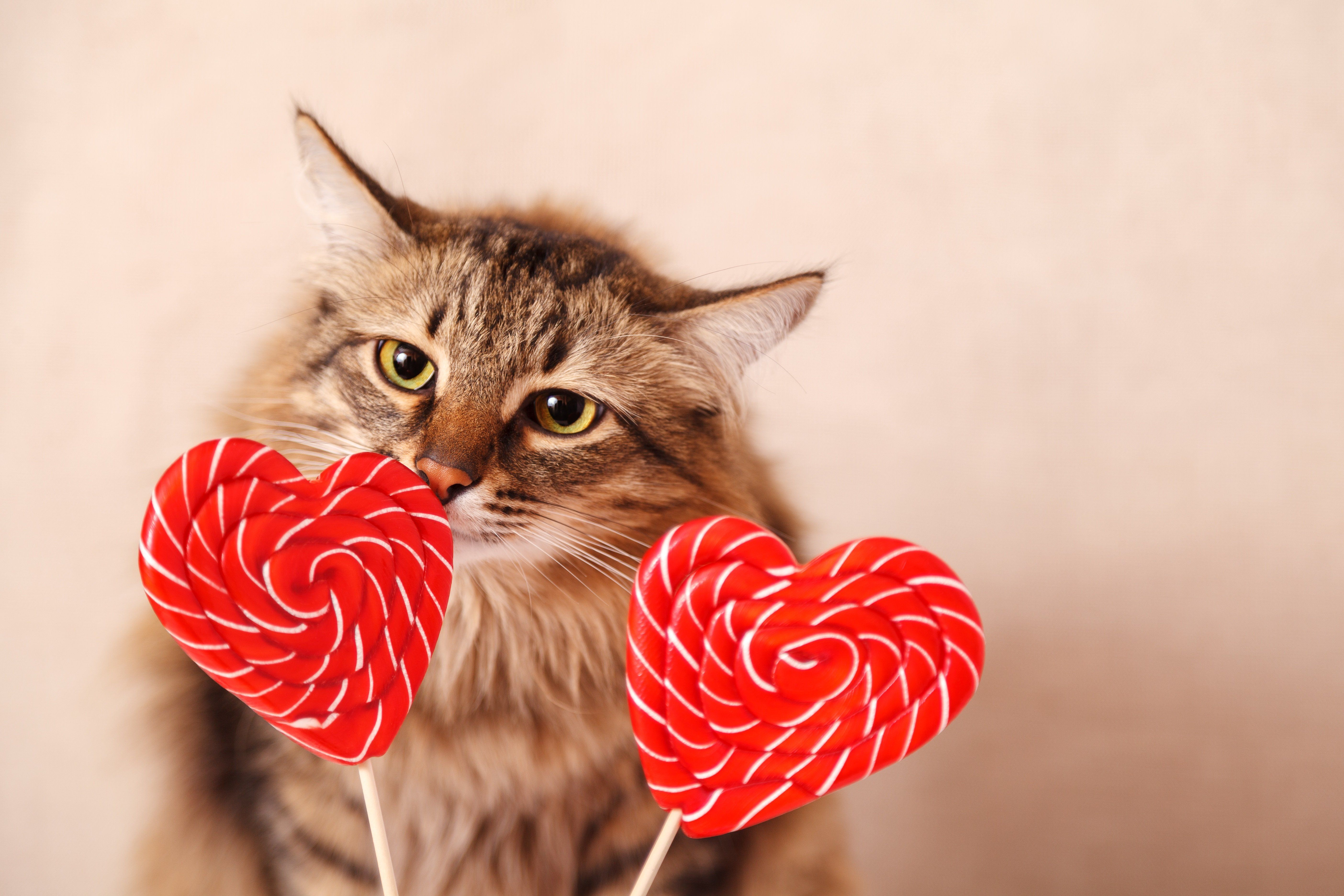 20 Cats Who Want To Be Your Valentine This Valentine S Day Pictures Cattime In 2020 Valentines Day Cat Cat Love Valentines Day Pictures