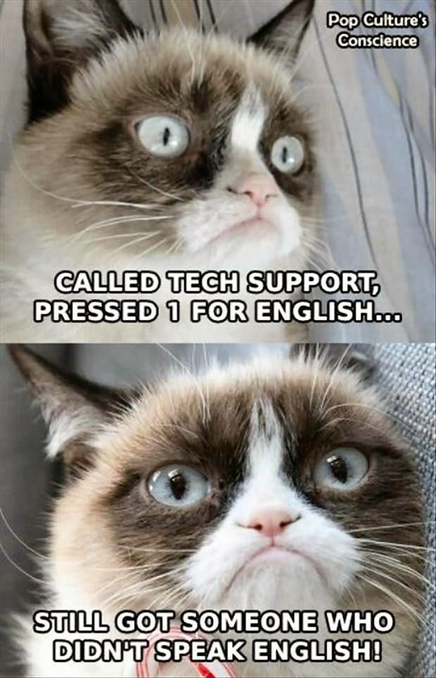 Grumpycat Cats Kittens Pets Animals Funny Yep Some Guy Named