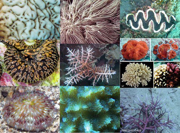Top 5 Invasive Corals That Border On Being Aquarium Pests Aquarium Saltwater Aquarium Marine Aquarium