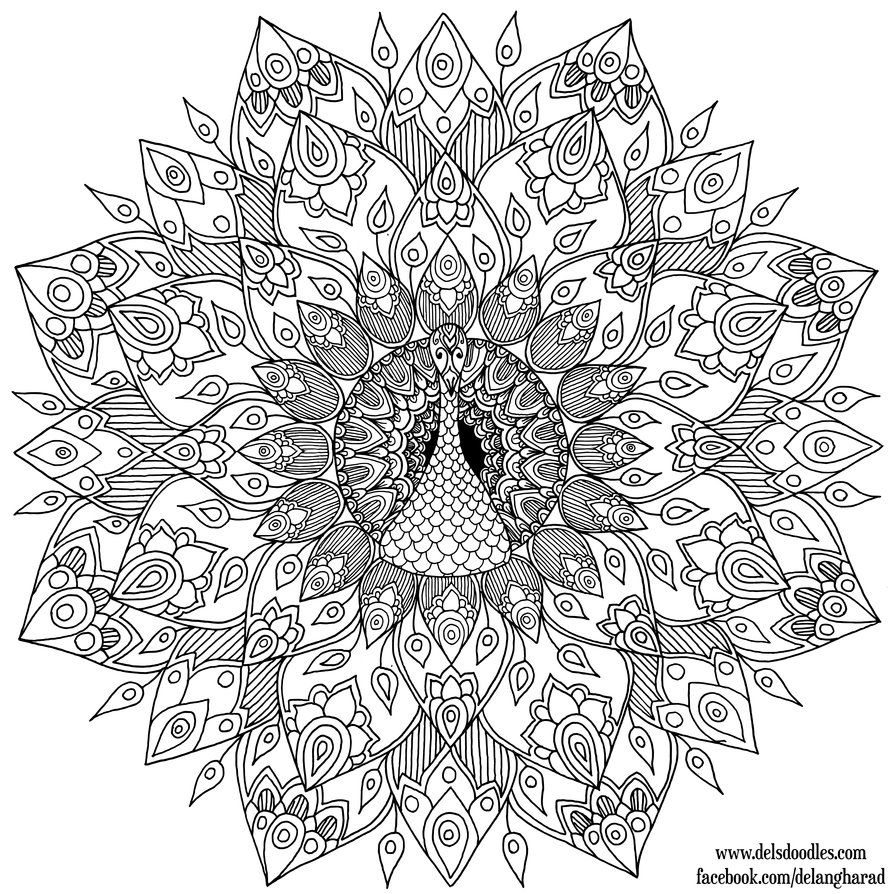 hand drawn peacock mandala colouring page by welshpixie on