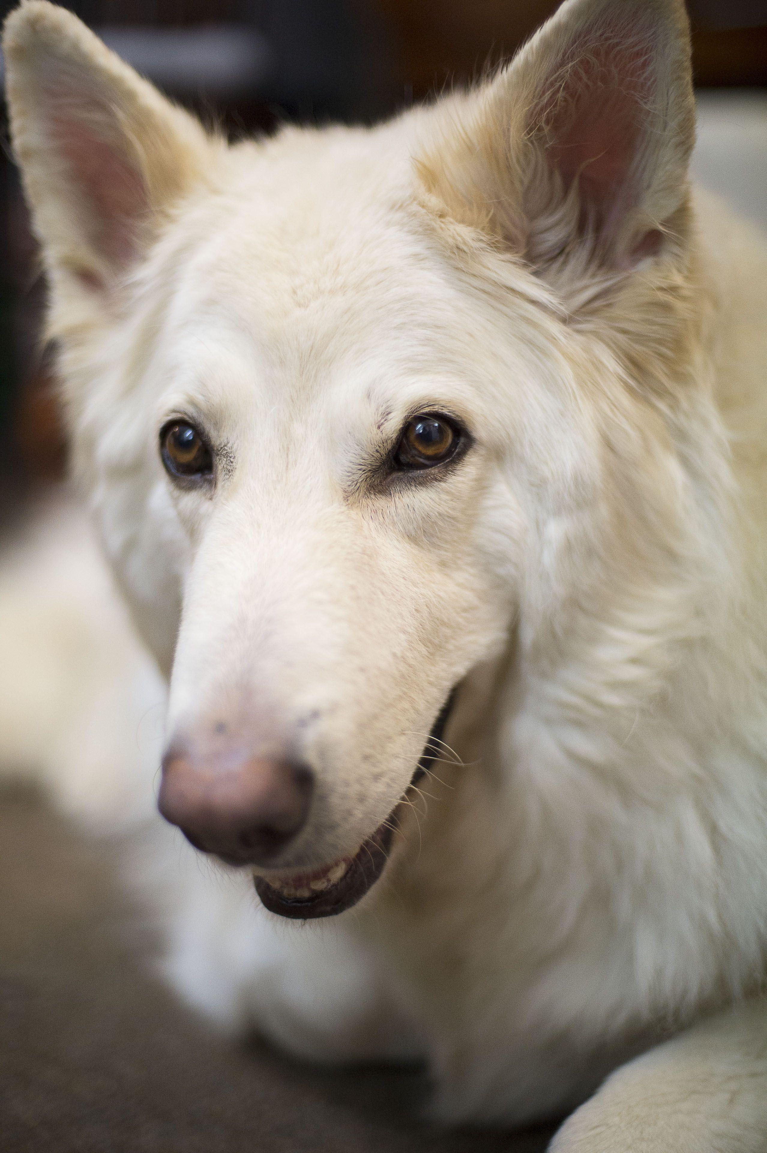 Pin by Margaret Worsham on Noah's Ark Dogs, German