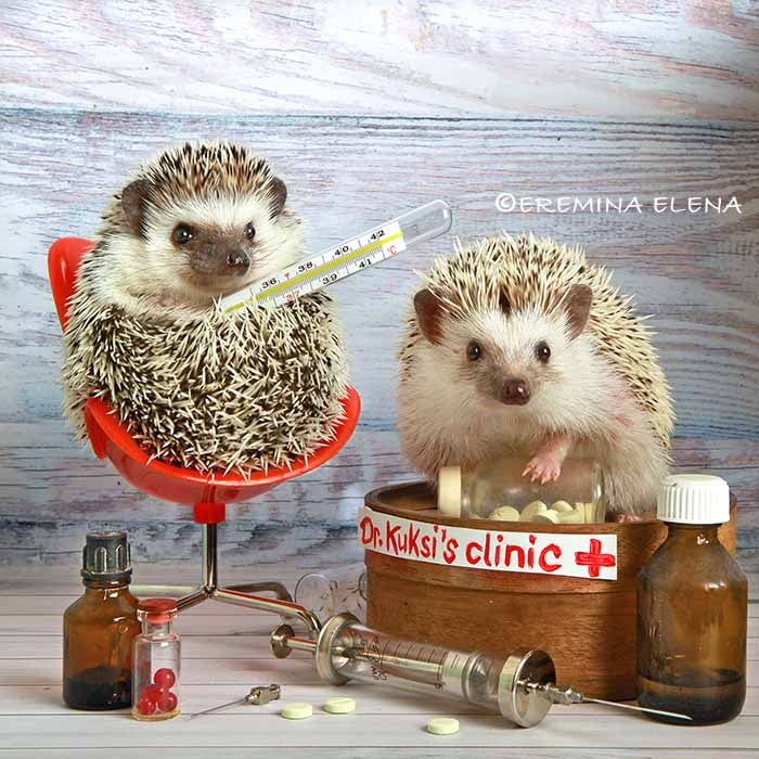 Doctor game - null | Hedgehog pet, Cute kawaii animals, Baby hedgehog
