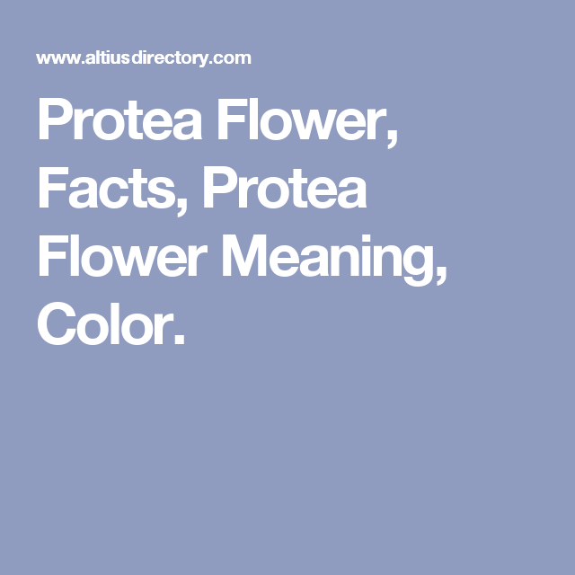 Protea Flower Facts Protea Flower Meaning Color Protea Flower Flower Meanings Protea