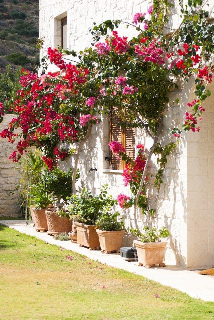 10 Garden Ideas To Steal From Greece Greek Garden Mediterranean Garden Planting Flowers