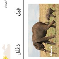 صغار الحيوانات 6