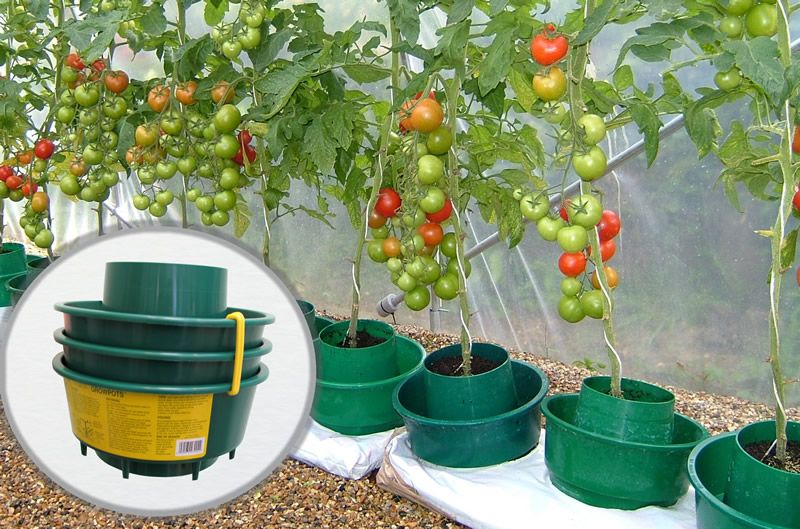 tomato grow pot produce abundant tomato crop yields using. Black Bedroom Furniture Sets. Home Design Ideas