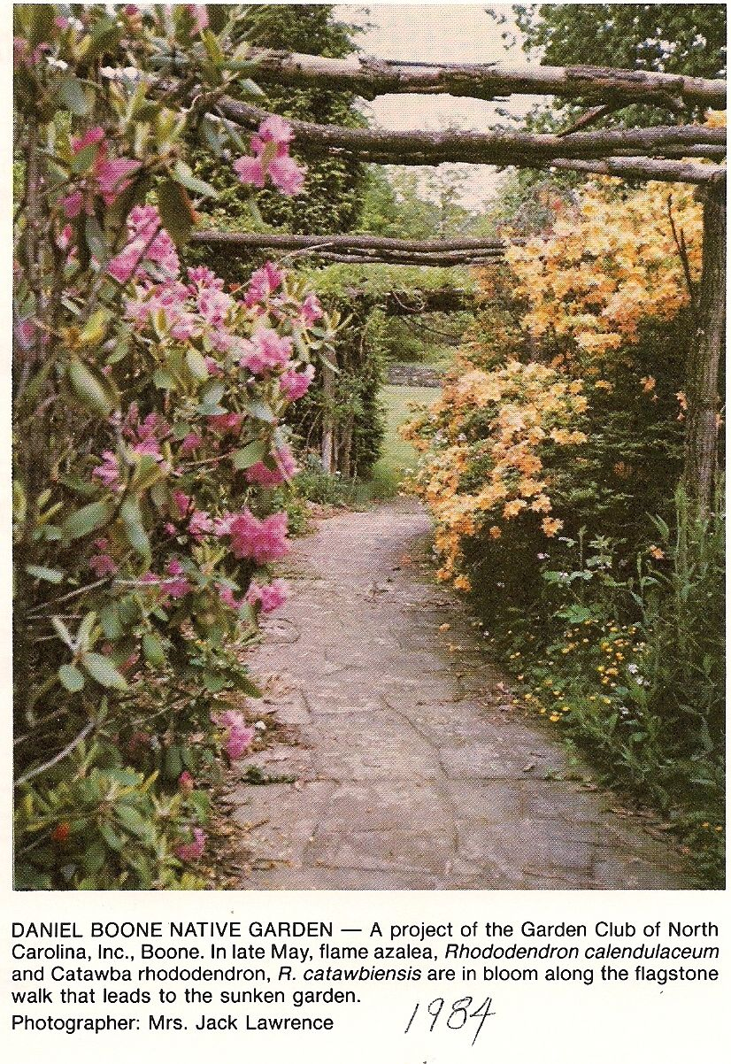 1984 Flame azaleas in Boone NC. What is not to love!?!?! | Native ...