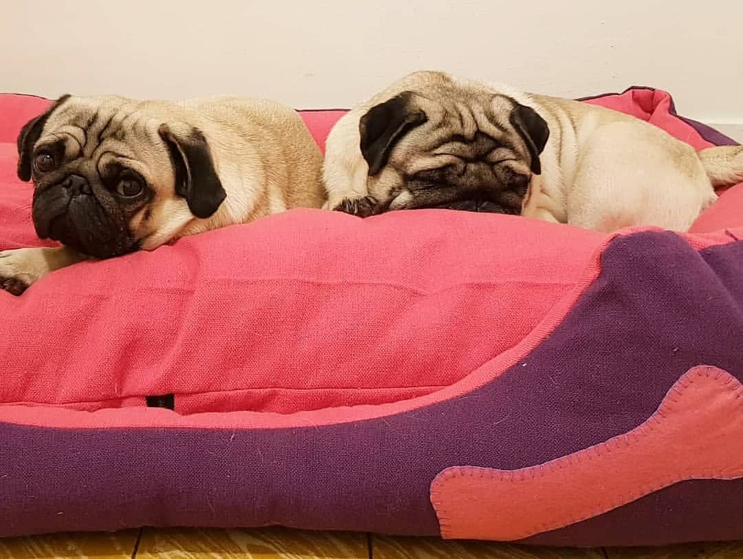 It S A Pug S Life Furbabybed Furbaby Dogs Dogbed