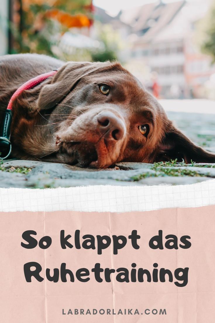 Photo of Entrenamiento silencioso para perros – Labrador Laika