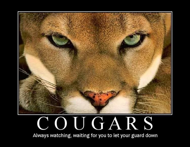 the cougar meaning