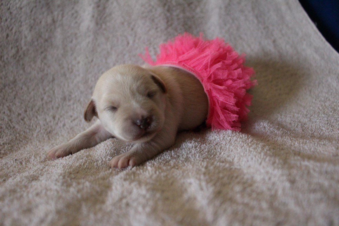 Tiny Puppies In Tiny Costumes It S All You Really Need This