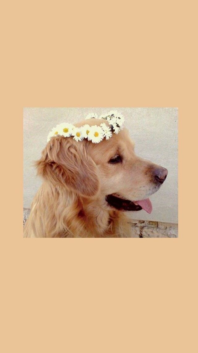 Cute Aesthetic Wallpapers Dogs