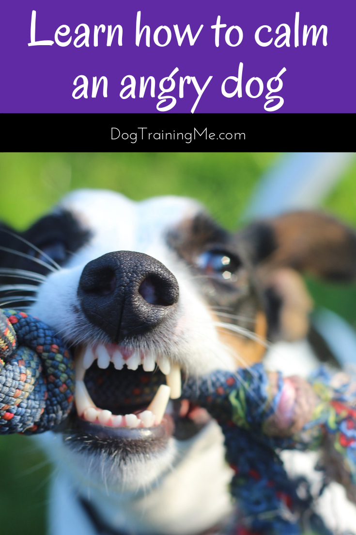 Learn How To Calm An Angry Dog With These Tips That Help You Control An Aggressive Dog Your Dominant Dog Can Learn To Be Aggressive Dog Angry Dog Dog Training