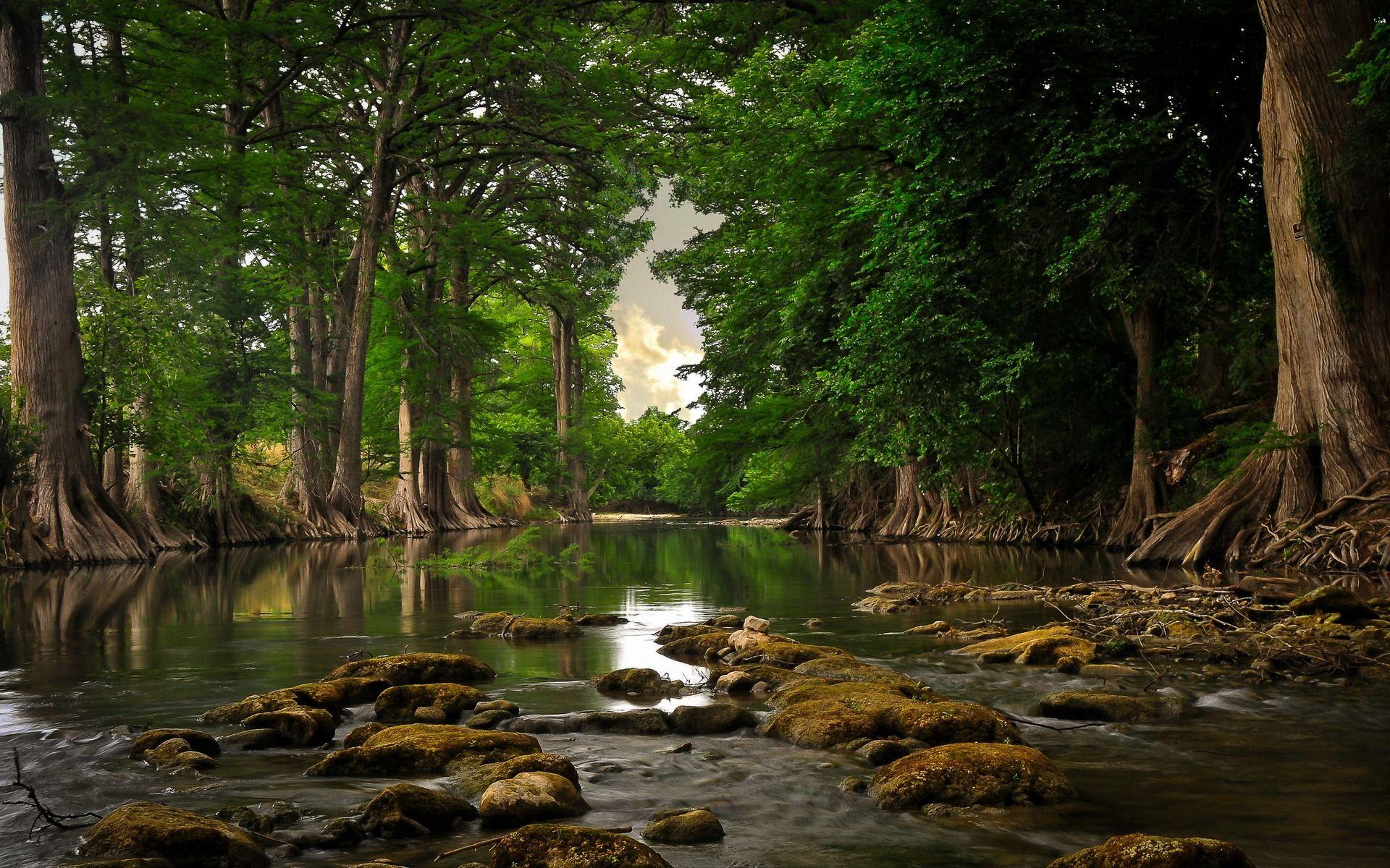 Resultado De Imagen Para Imagen De La Naturaleza En Hd Fondos De Escritorio Descargar Fondos De Pantalla Para Pc Fondos De Pantalla Bosques