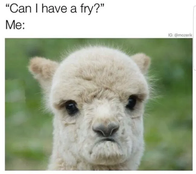 49 Animal Memes Because Animals Are Funny Funny animal