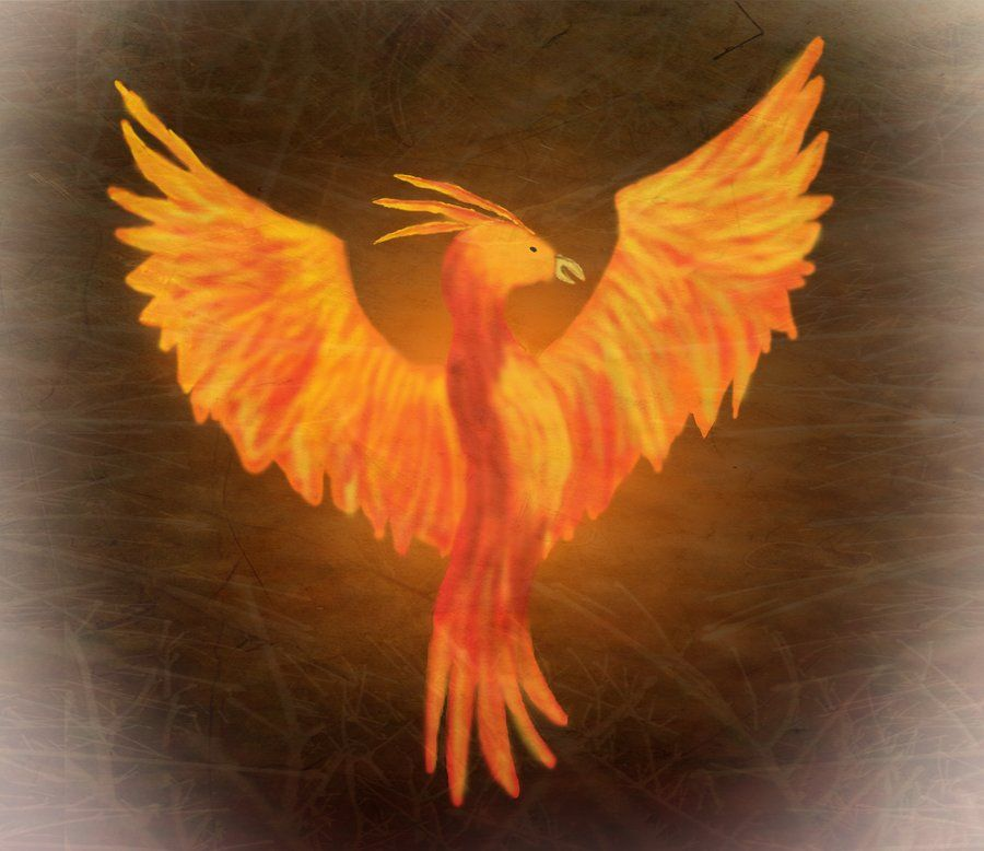 Fawkes The Phoenix Harry Potter By Darkshine97 On Deviantart Phoenix Harry Potter Harry James Potter Potter