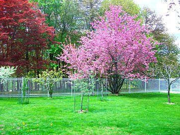 Fenced Area With Dwarf Fruit Trees Apple Pear Plum Peach Lakes