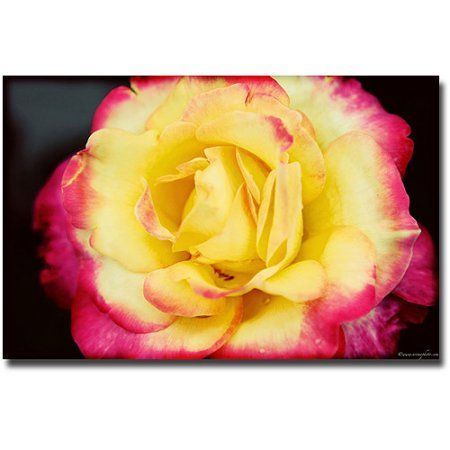 Trademark Fine Art Yellow Rose Canvas Wall Art by Ariane Moshayedi ...