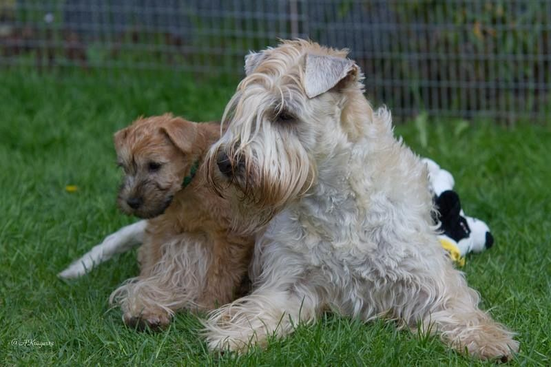 Britt's zusje met haar pup.  www.wheatenmylove.de