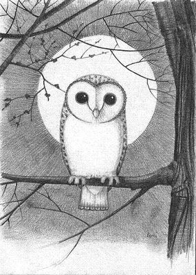 Image Result For Owl Full Moon Drawing Pretty Drawingz Dibujos