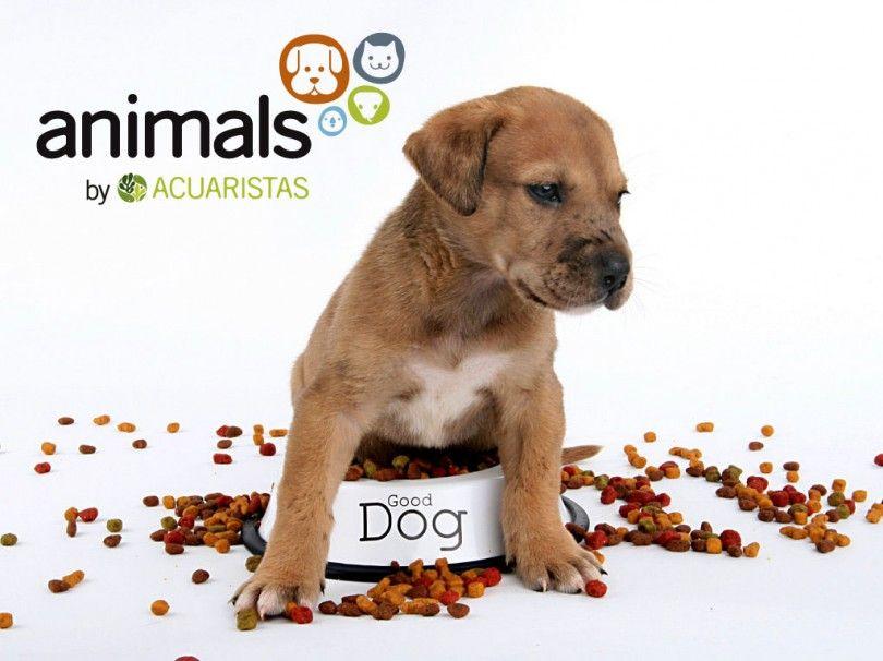 Quieres Ganar Dos Meses De Alimento Gratis Para Tu Mascota