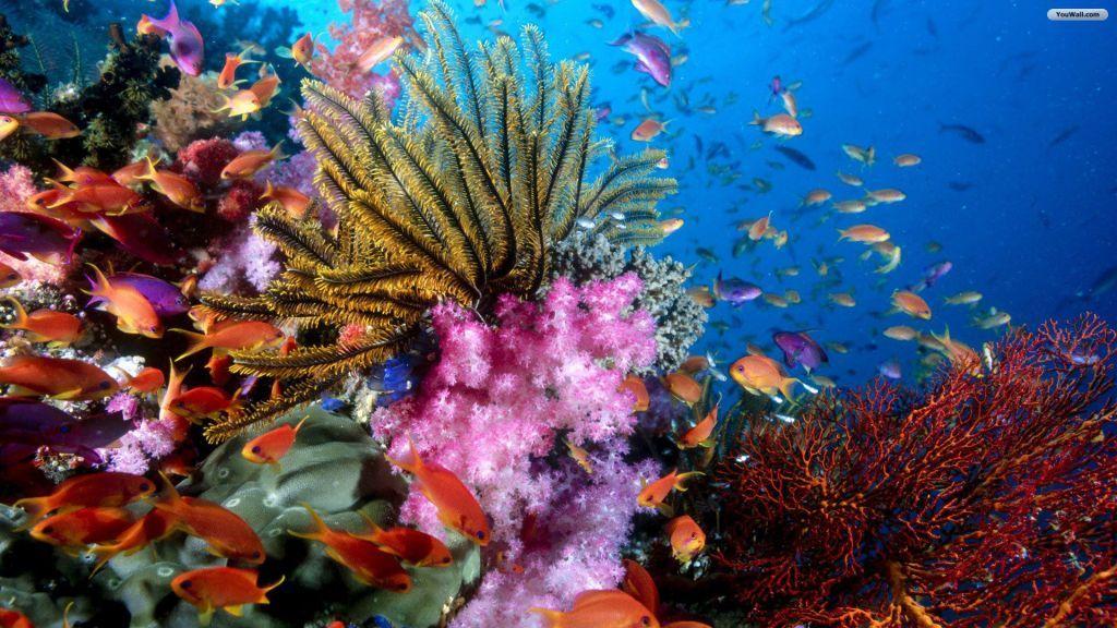 Epingle Par Nancy Sur Concept Sea Poisson Image Fond D Ecran Corail Recif Corallien