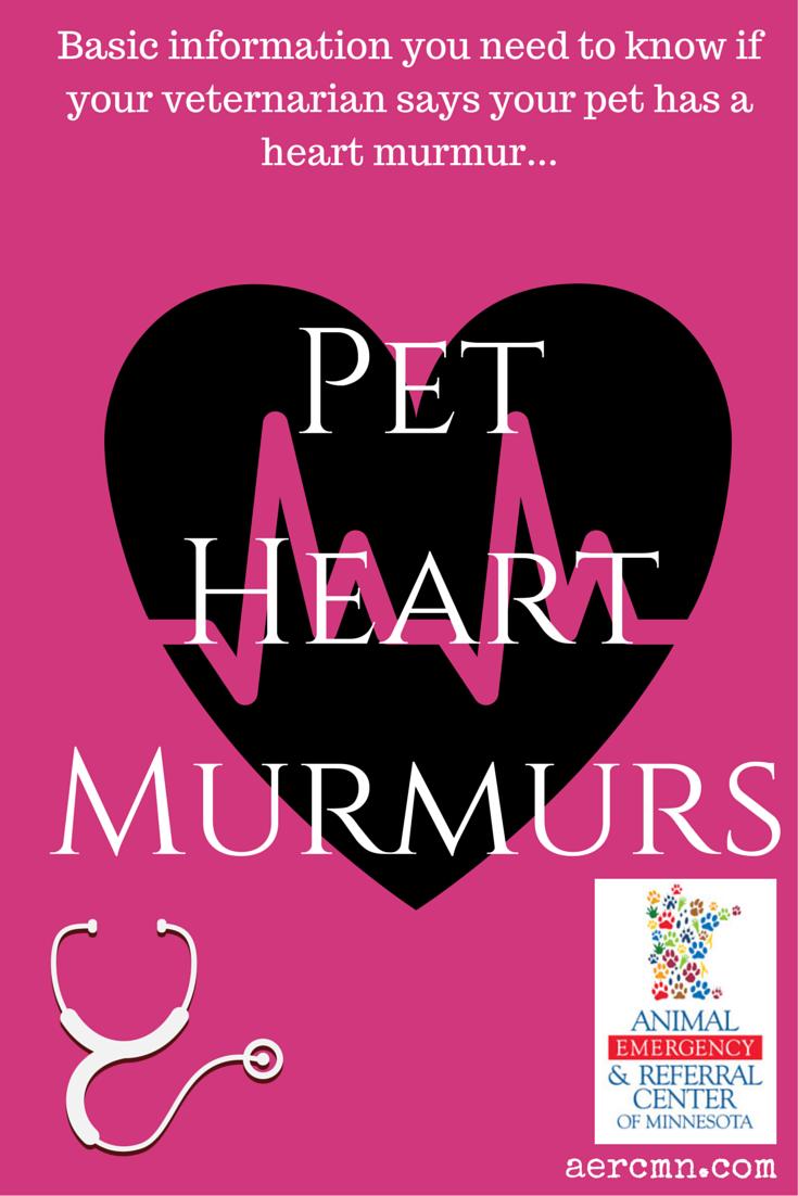 Pet Heart Murmurs Heart murmur, Emergency vet, Pets