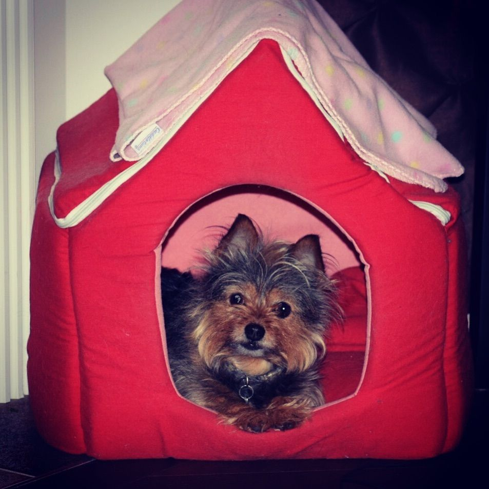 Just Hanging Out In My Little Dog House Thats Inside Of My Big