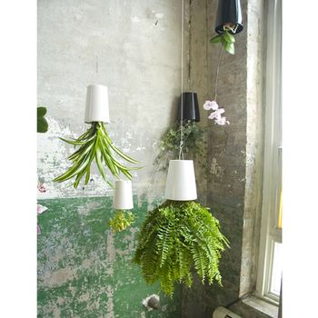 Every interior needs plants