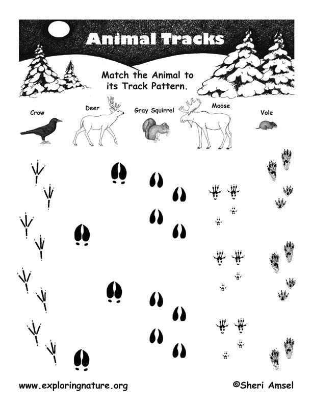 animal tracks Kids Nature Pinterest Animal, Homeschool and School - new deer tracks coloring pages