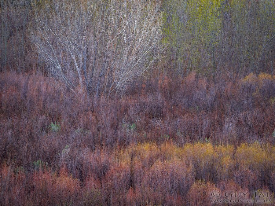 Winter is Over / Fine Art Landscape Photograph by Guy Tal