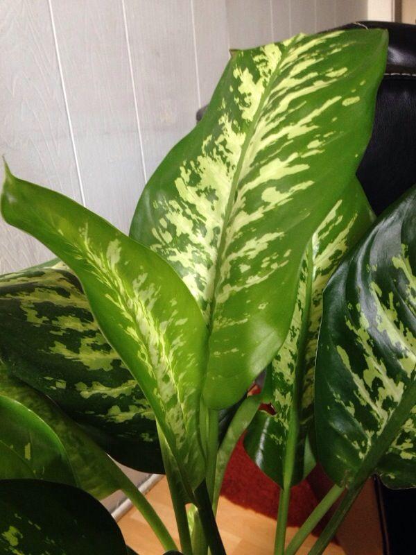 Free Plant Identification | Plants, Plant identification ... on
